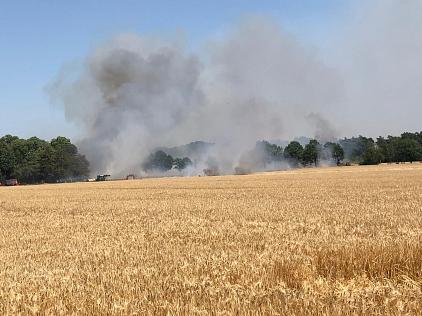 Flächenbrand_Bohnhorst_30.06.2019_001©Freiwillige Feuerwehr Essern